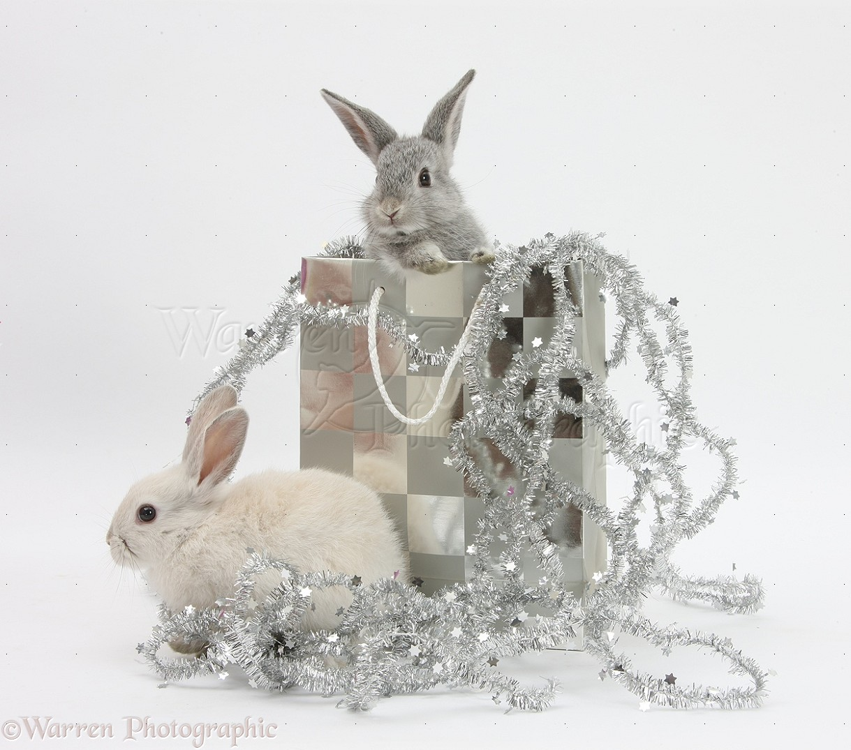 WP29352 Two baby silver rabbits in a gift bag with Christmas tinsel.