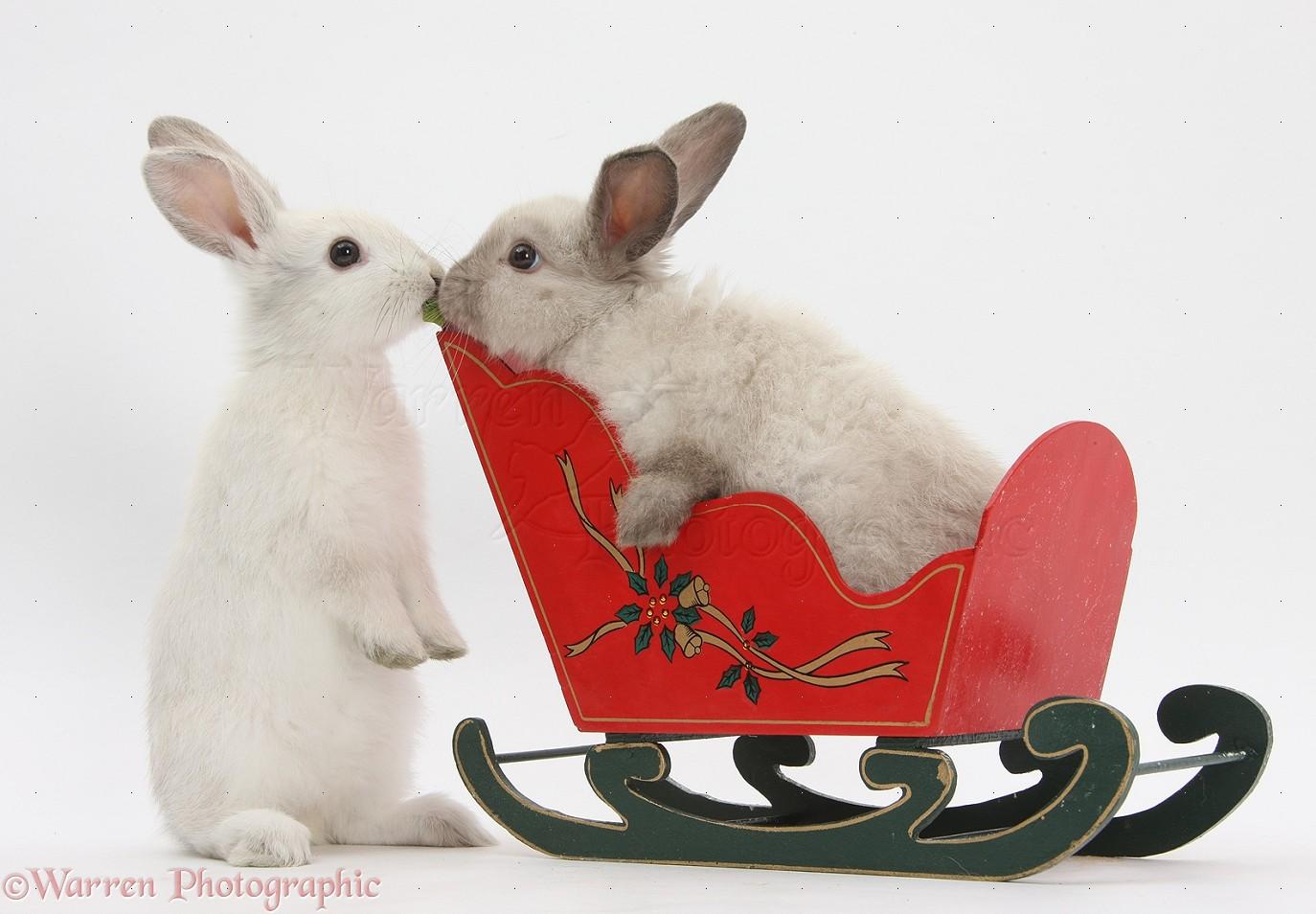 House Rabbit Society  Buy a Bunny a Little Time