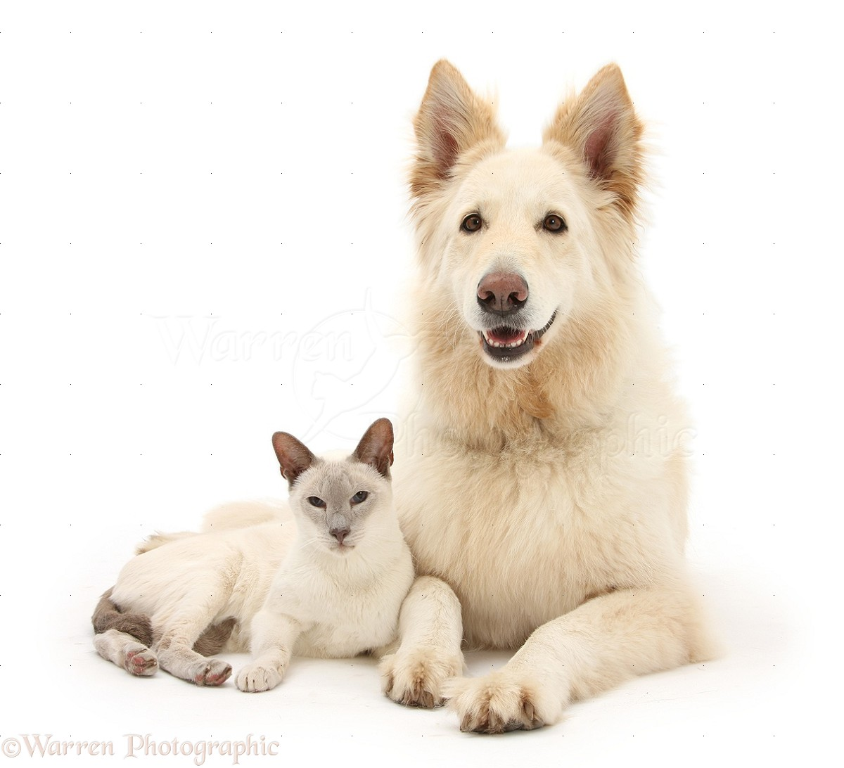 Photo Of Cute Dog And Cat