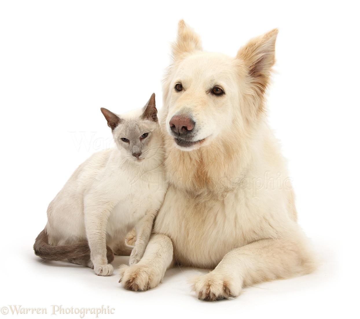 The Dog Cat