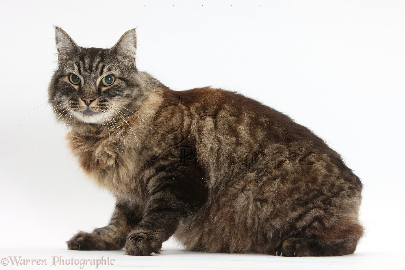 how to clean an elderly cat