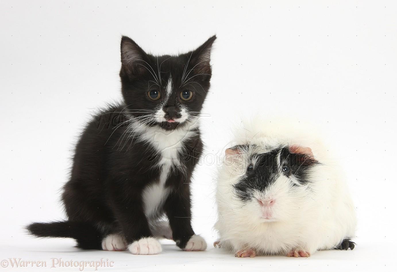 black cat in japanese