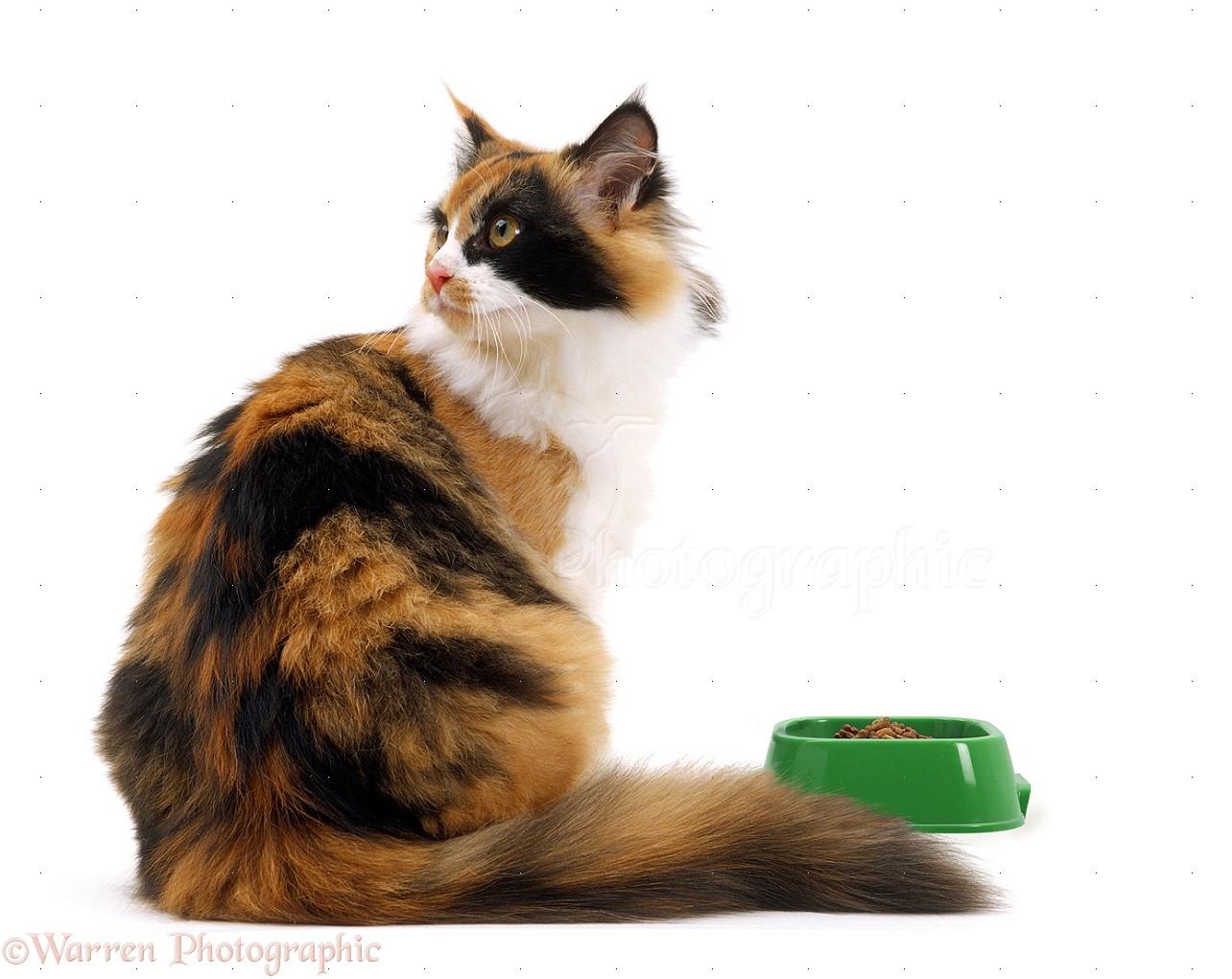 Fussy Cat Kitten Food