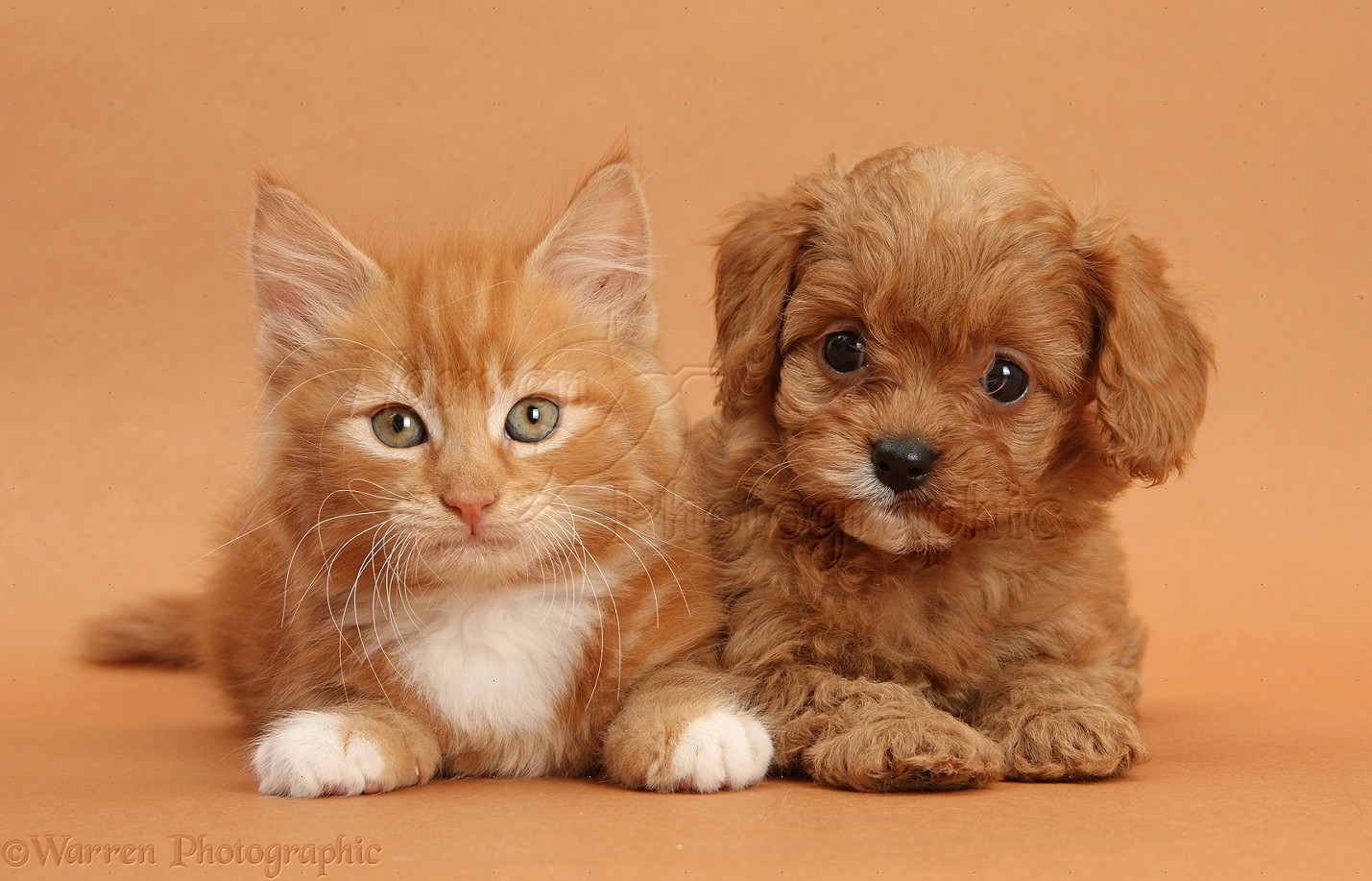 Dog And Cat Breed Together