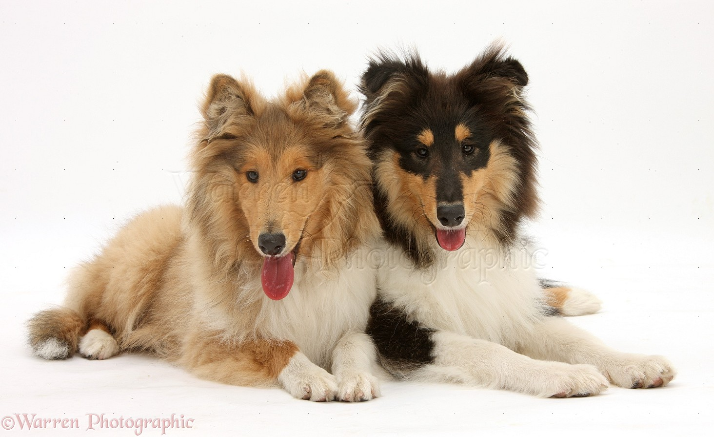 Rough Collie. Harry Styles Rough Dirty Imagines Tumblr. View Original ...