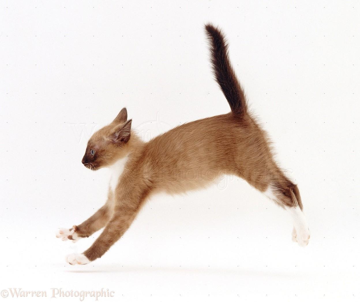 kitten cant poop