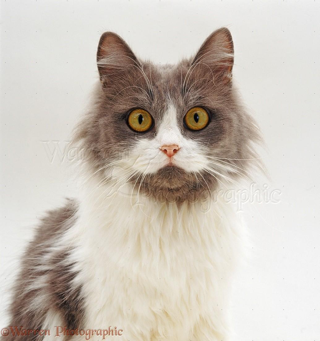 Grey-and-white cat with large orange eyes photo WP32248