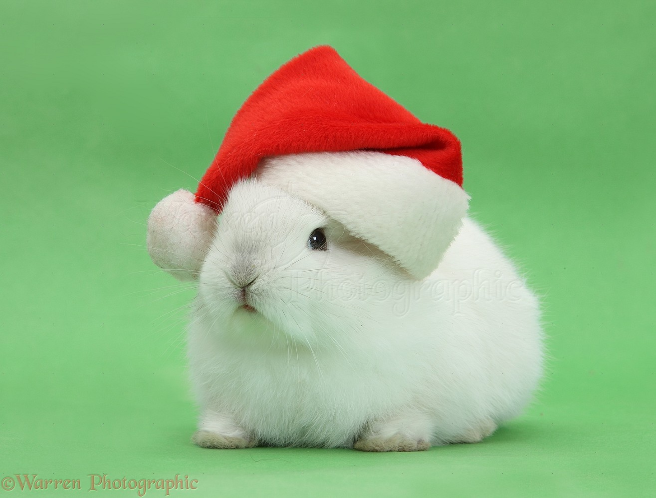 More bunnies with hats christmas hat on a squishy looking bunny