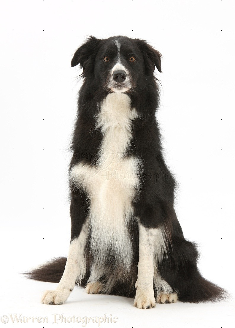 Pin Black And White Dog With White Background Hd Wallpapers 1920 X ...