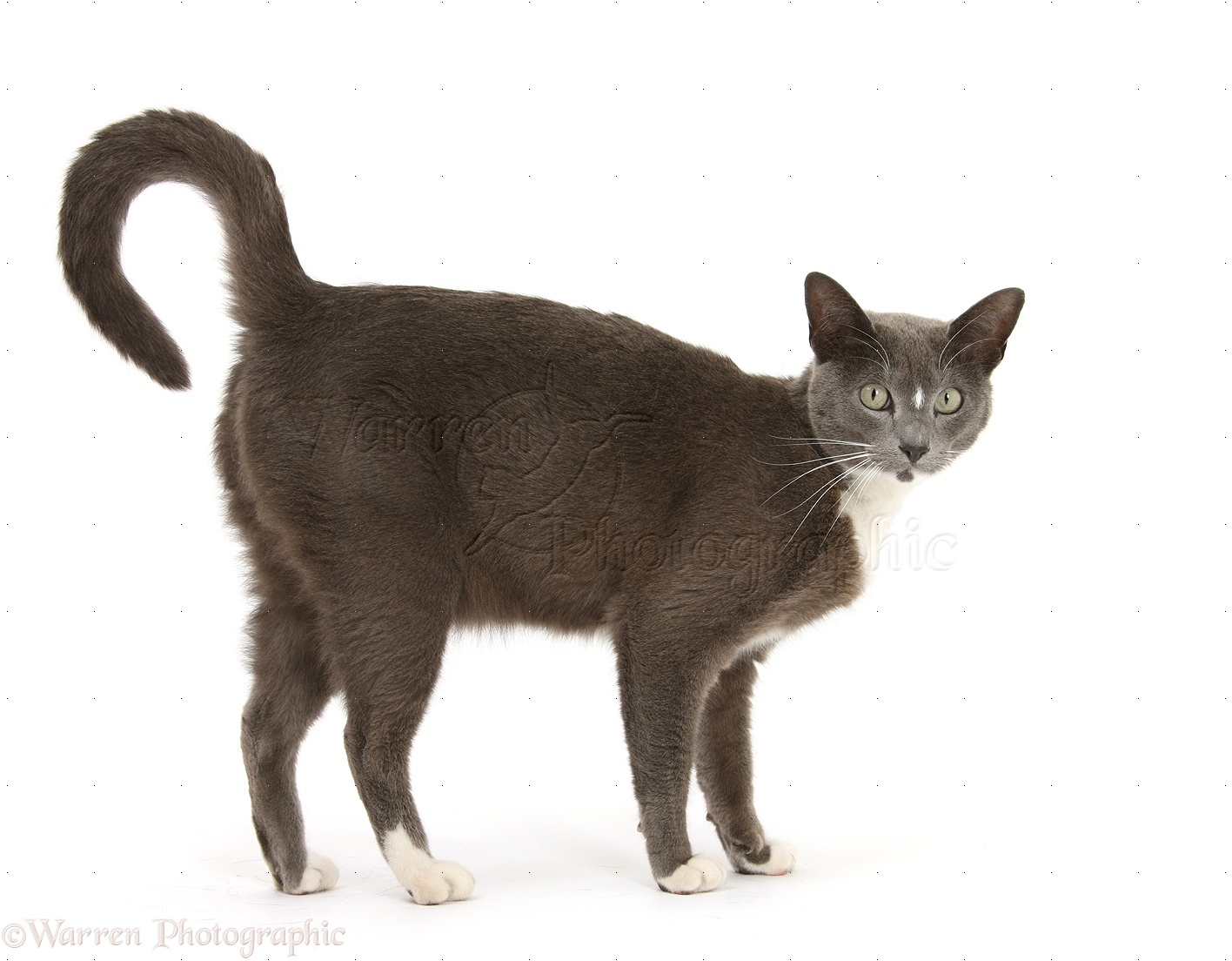 cat paw print vs dog
