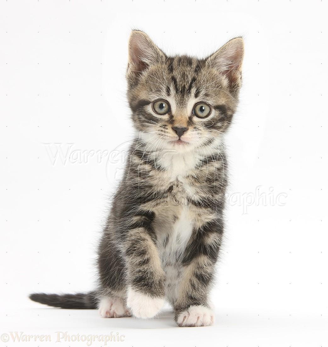 calico cat symbolism