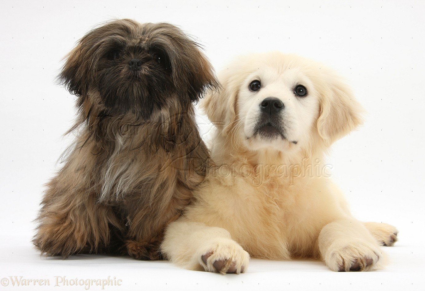 Cute Brown Dog Breeds