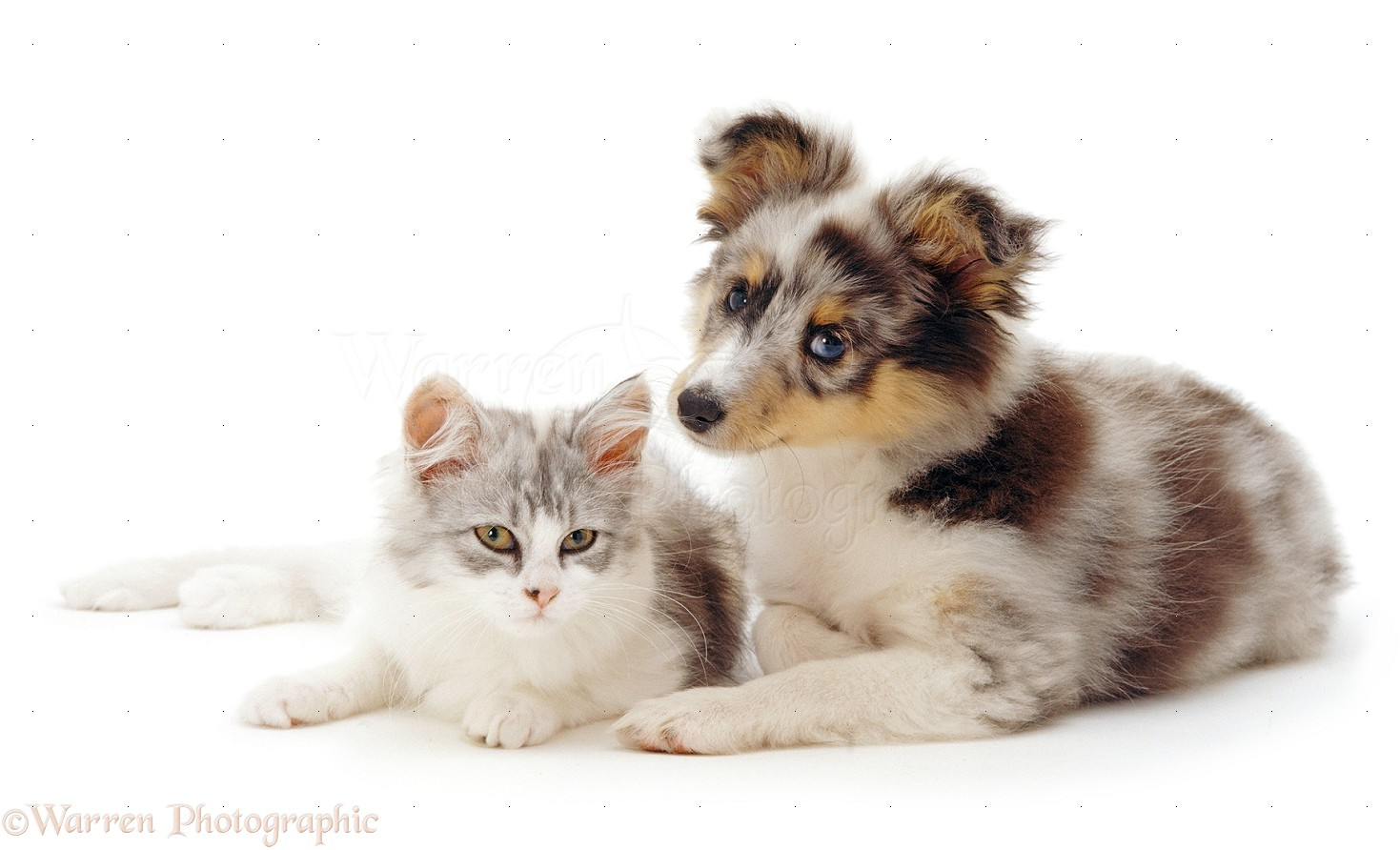 how to bring a new puppy home to a cat