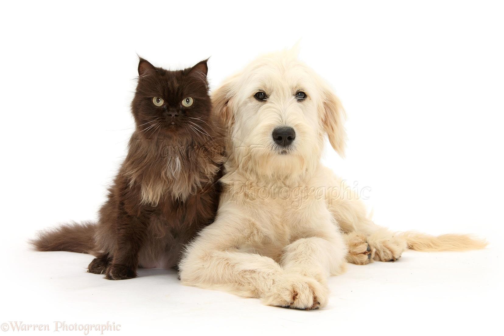 Cat Dog Transparent