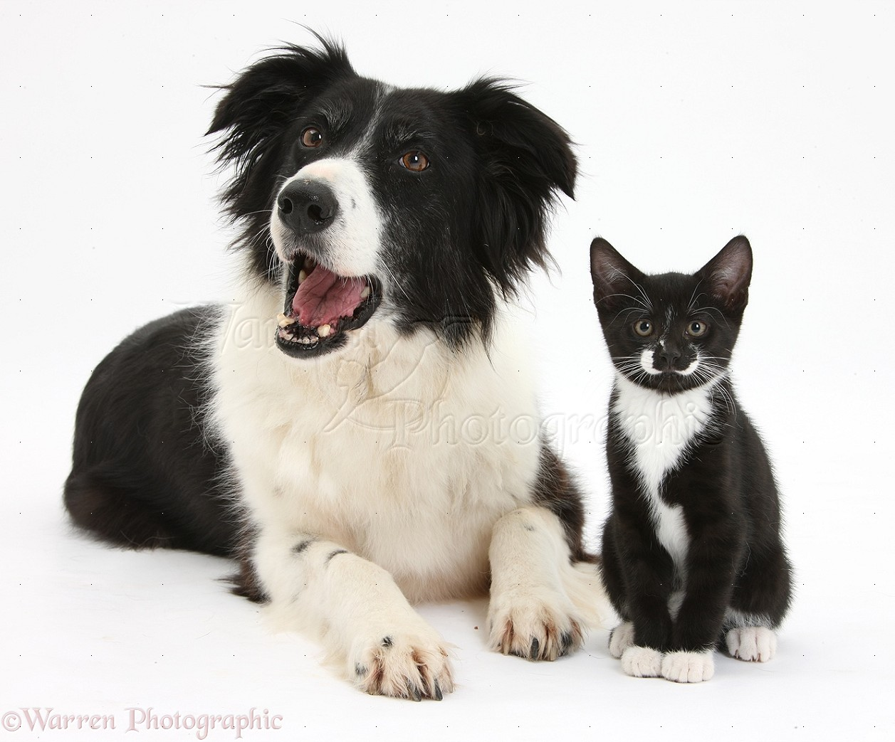 Pictures Of Dogs And Cats In Black And White