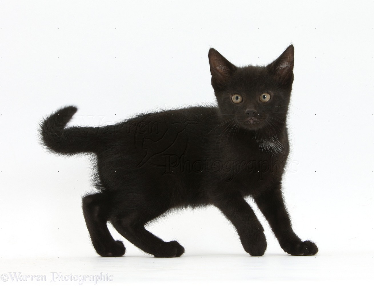 cat spring black single men Cat spring properties llc is in the nonresidential building  and employs approximately 3 people at this single location  black 0 asian 9 native american 0.
