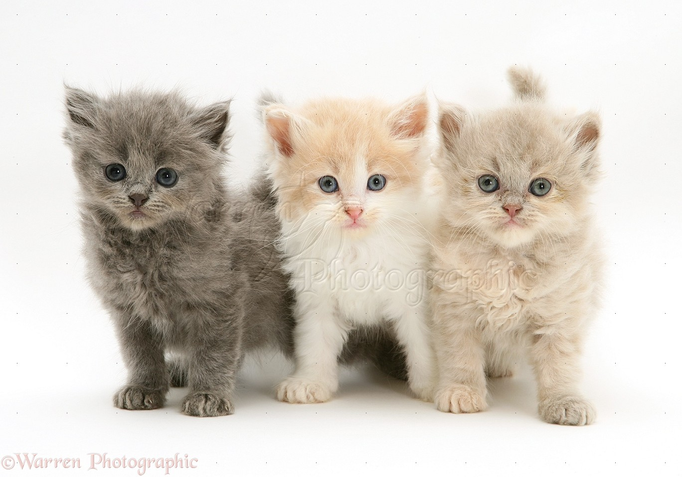 Three cute kittens photo wp34684 The three cats