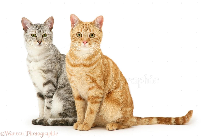fantastic beasts cat