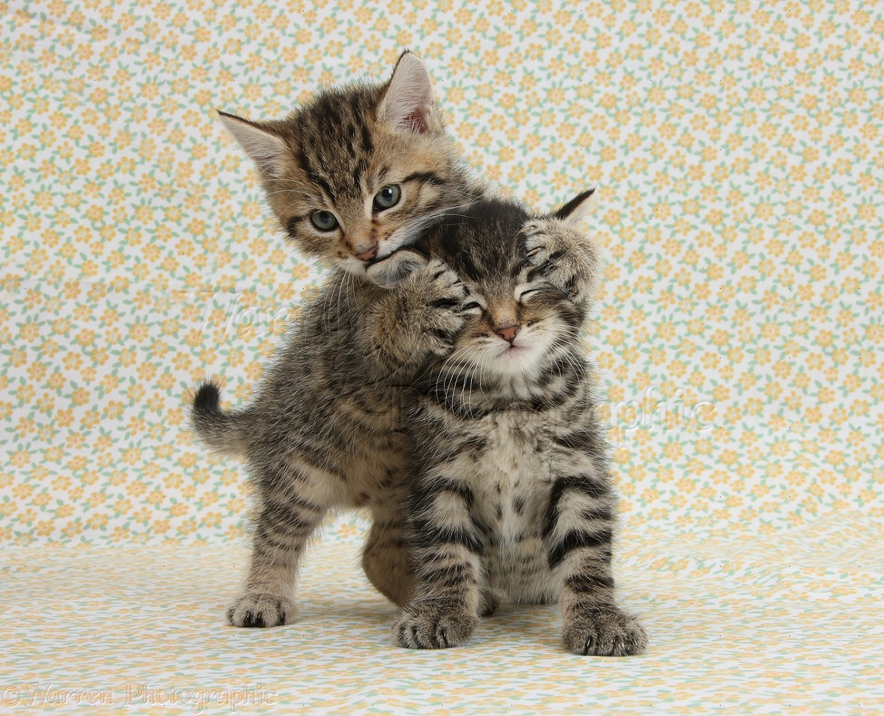 Two cute tabby kittens on flowery background photo WP