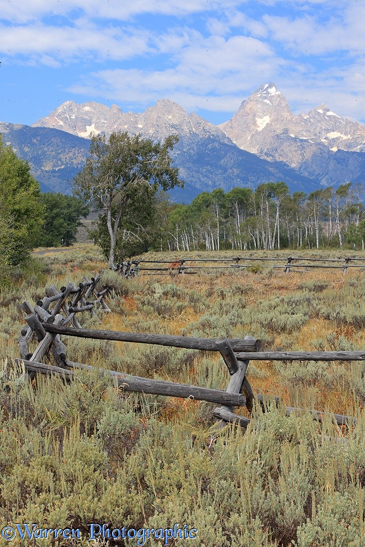 Old style buck and rail fence photo wp