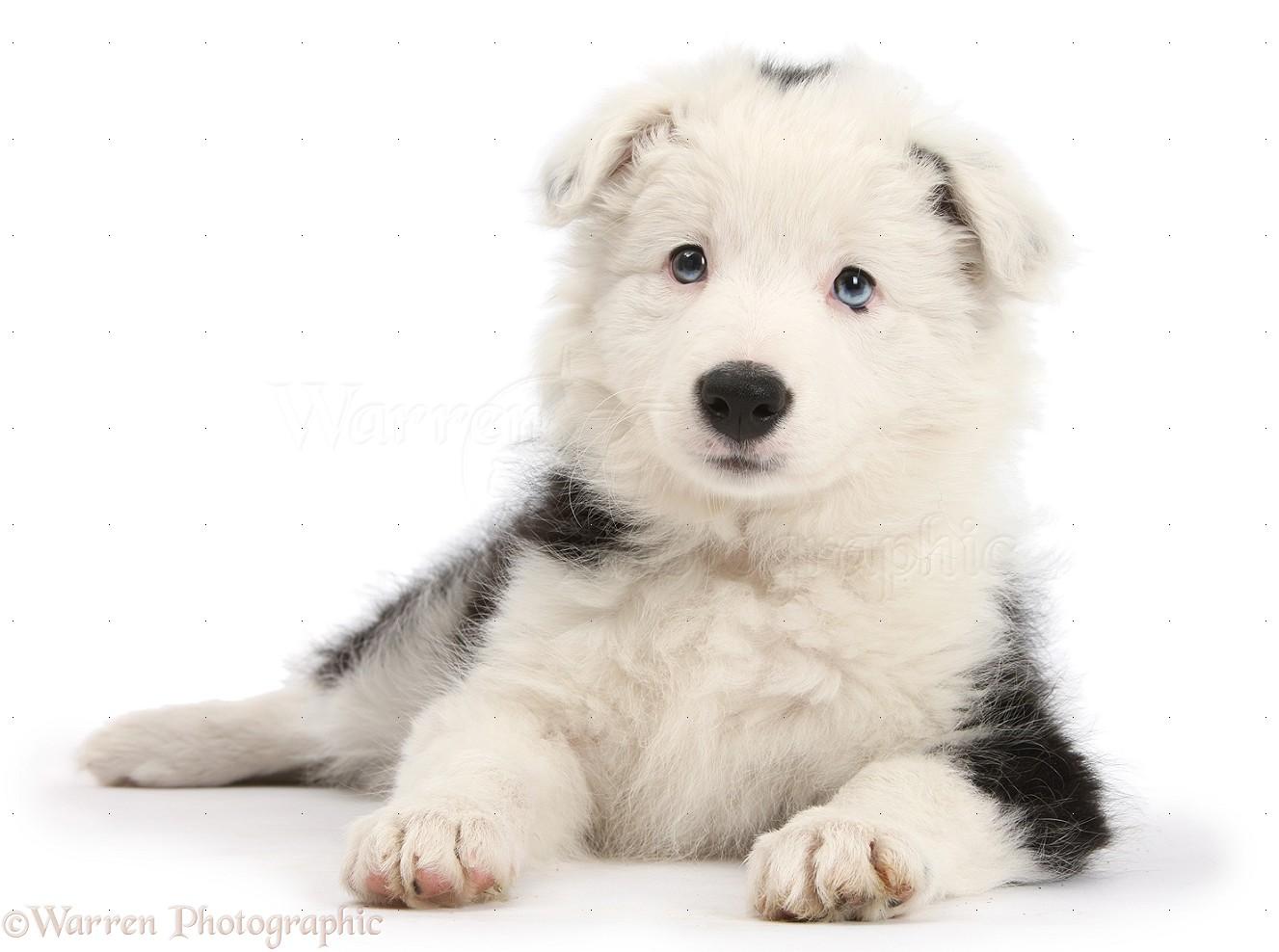 Dog Poo Bin For Home