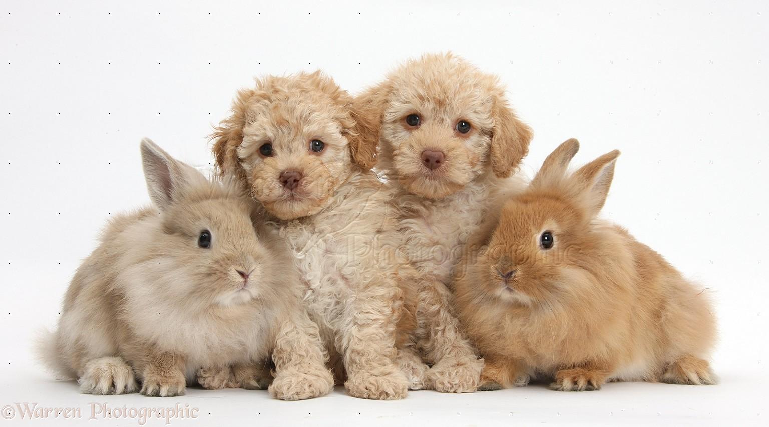Keeping Rabbits as Pets  Dog Breed Info