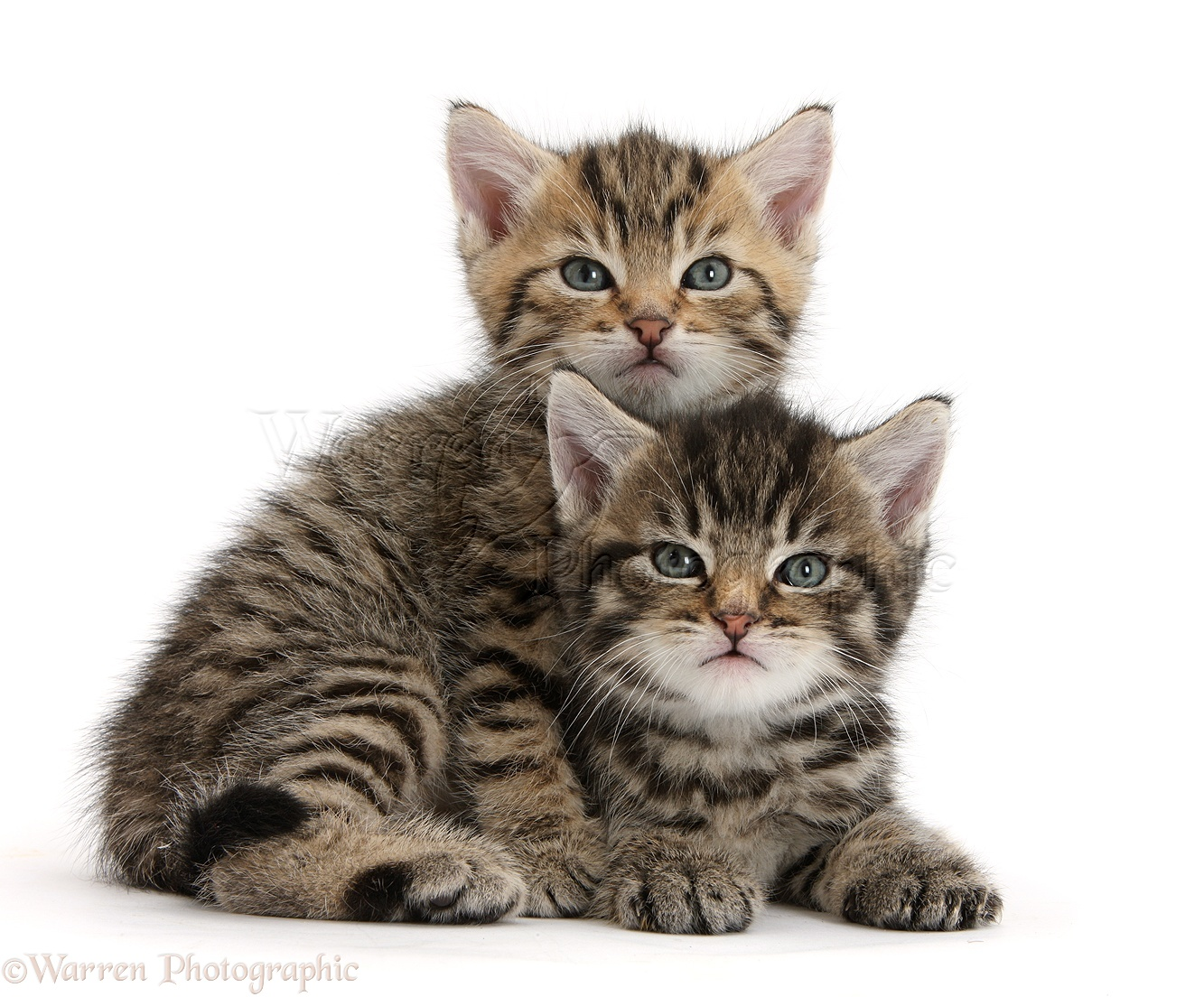 Cute Cat Picture Images
