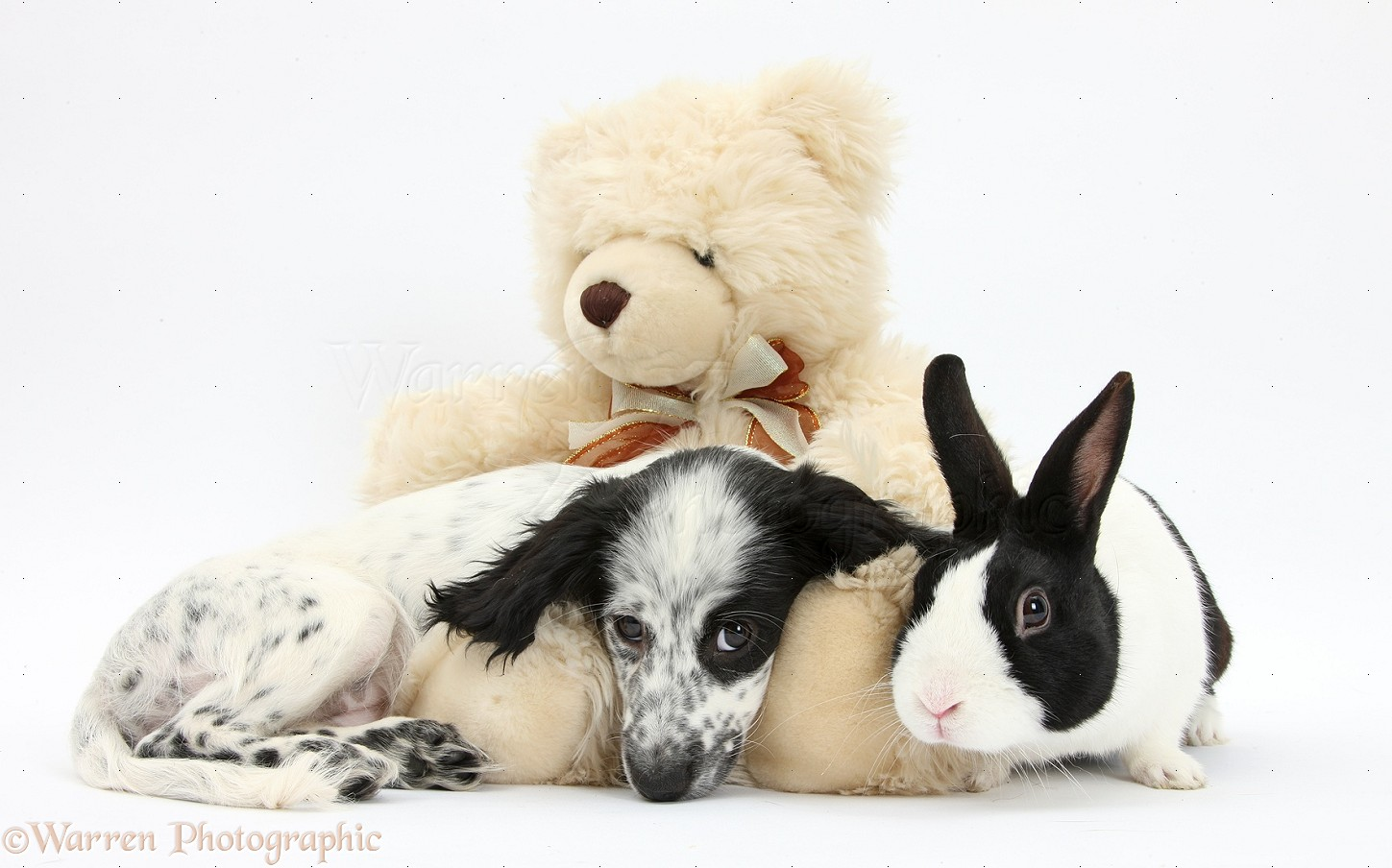 pets black and white puppy teddy bear and rabbit photo wp36266