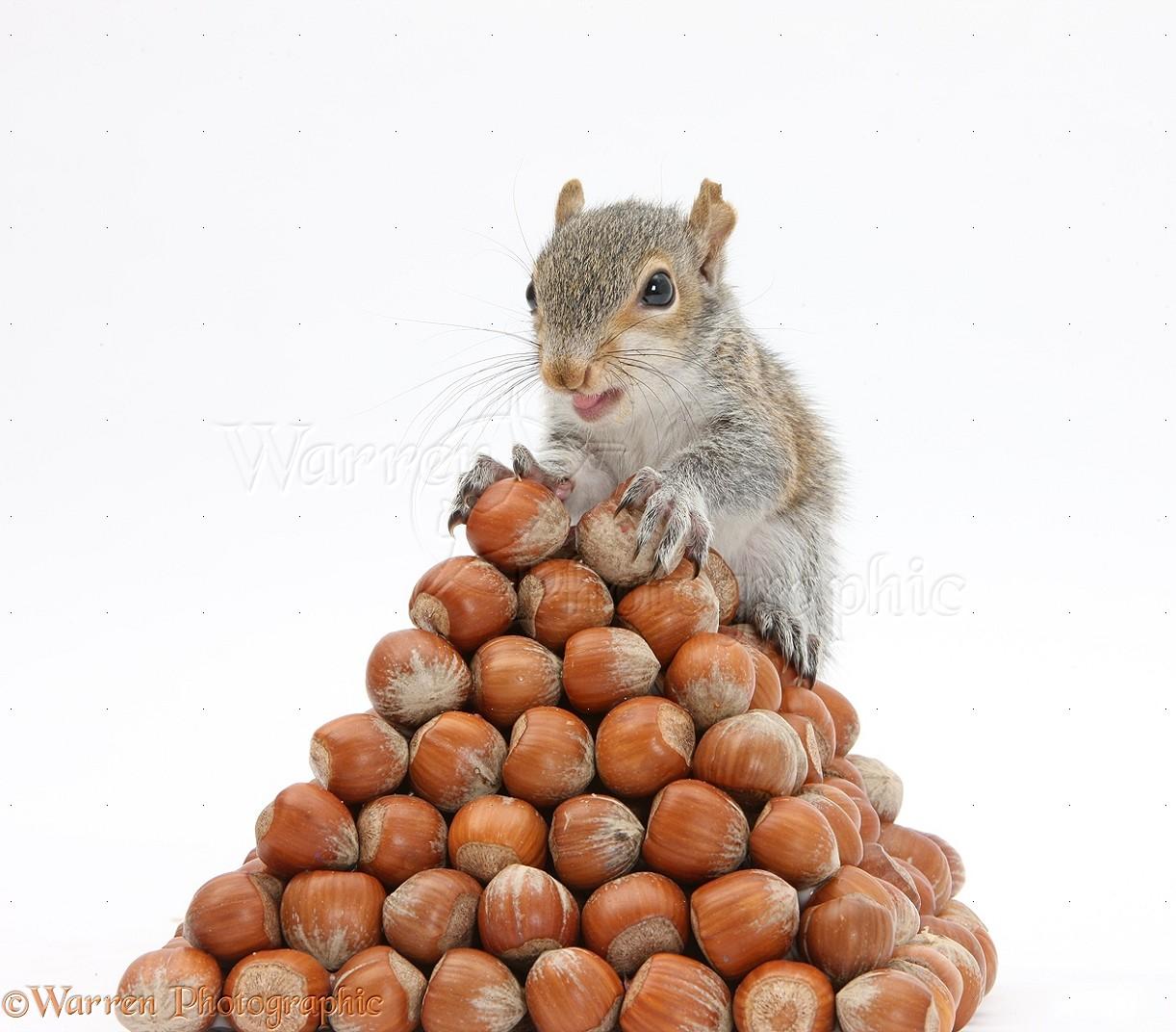 nuts men squirrels sandshrews and ozcakes the