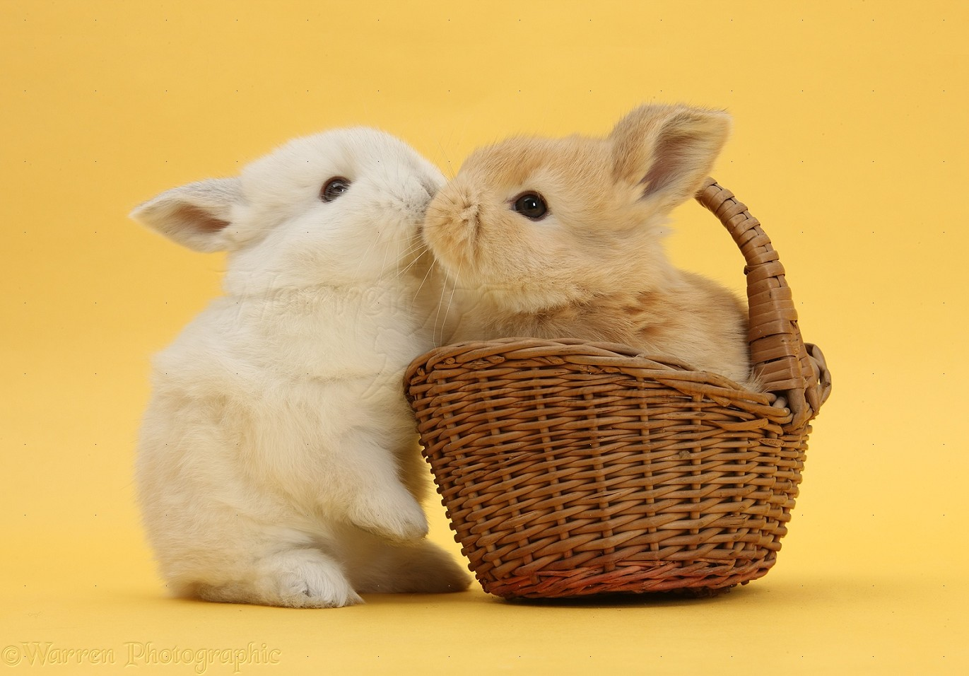 i can t resist it s time for rabbits kissing funny