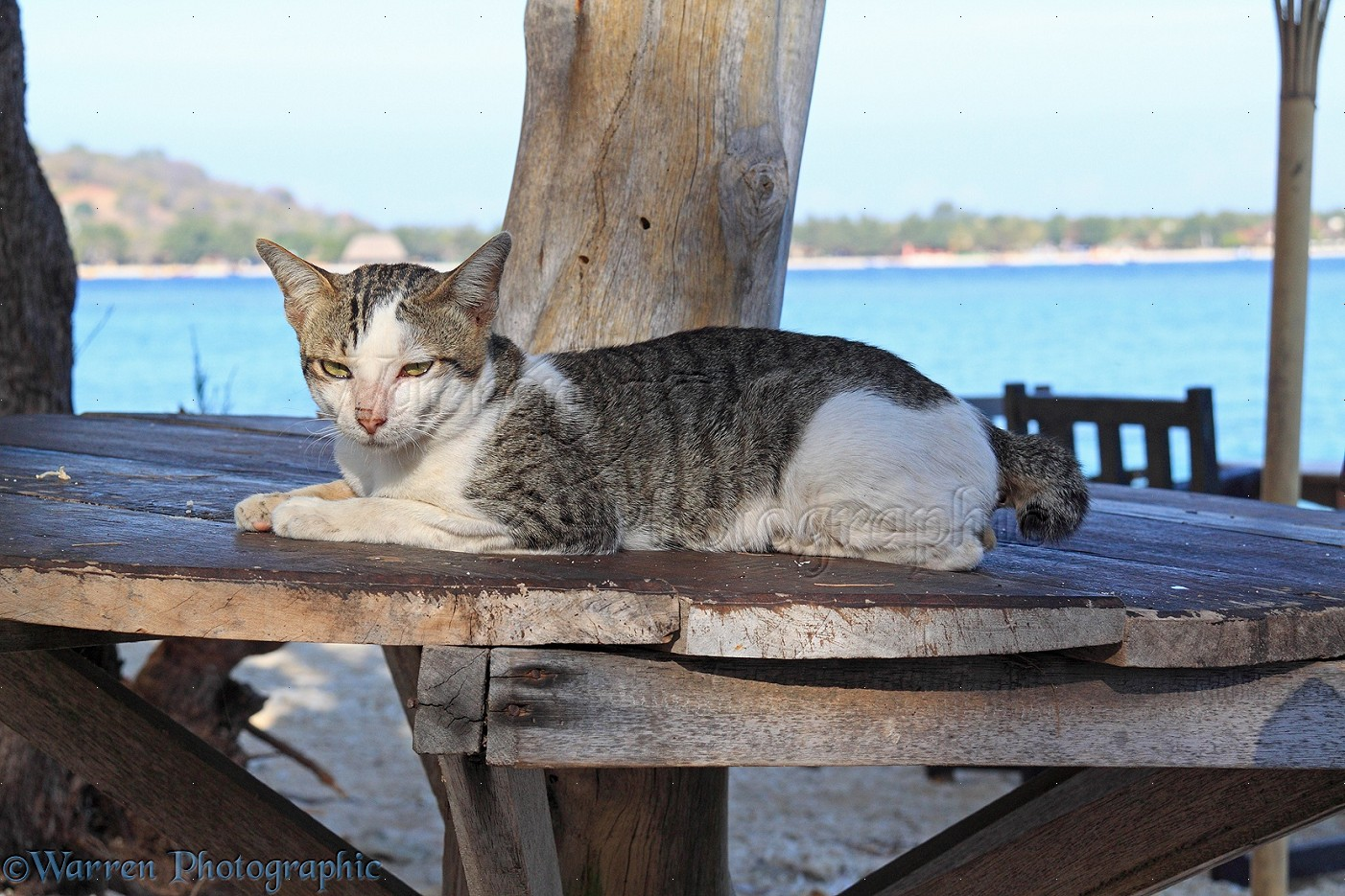 Beautiful Cat On Beach 1402 x 935 · 368 kB · jpeg