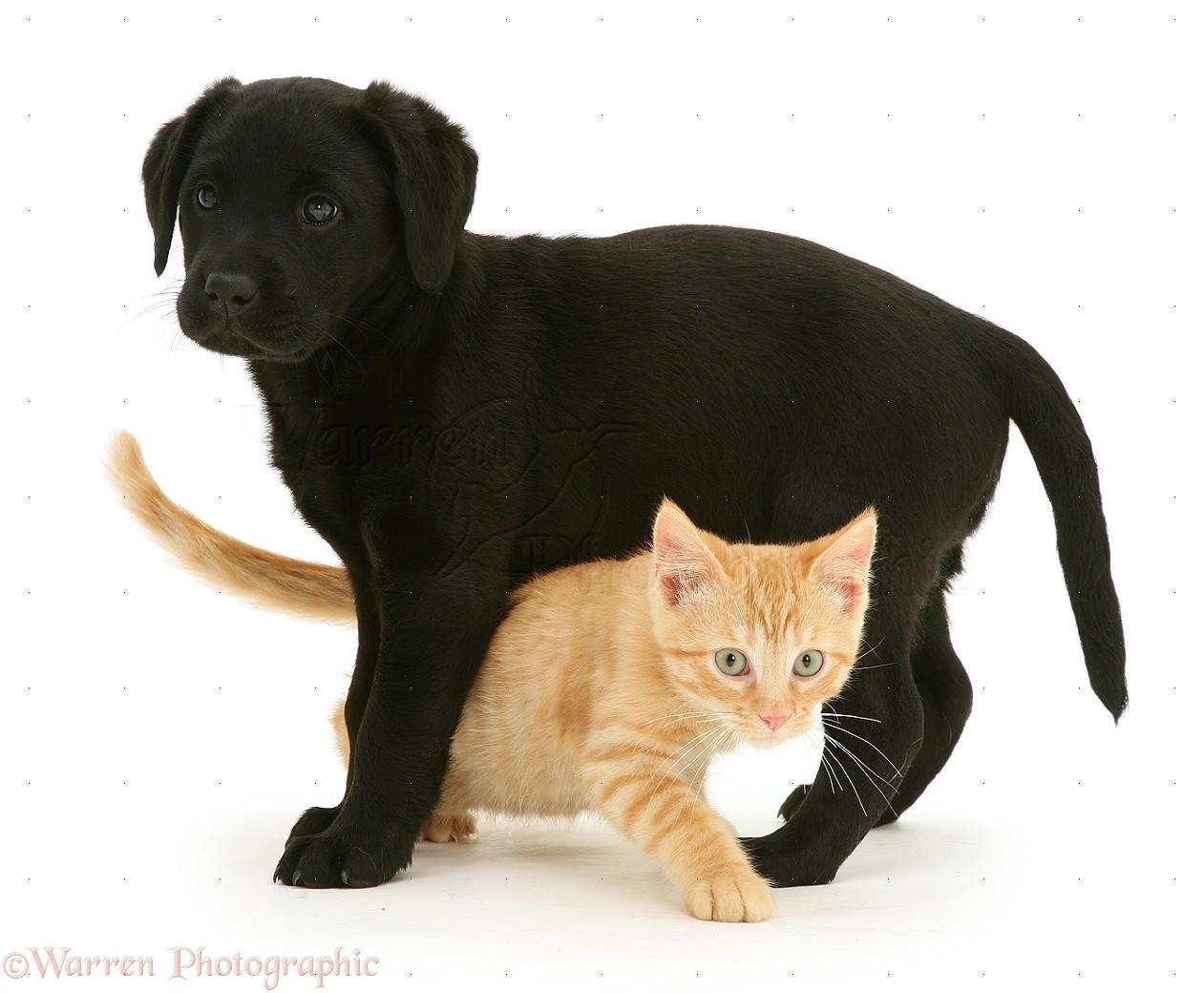 White Ginger Black Cat Together