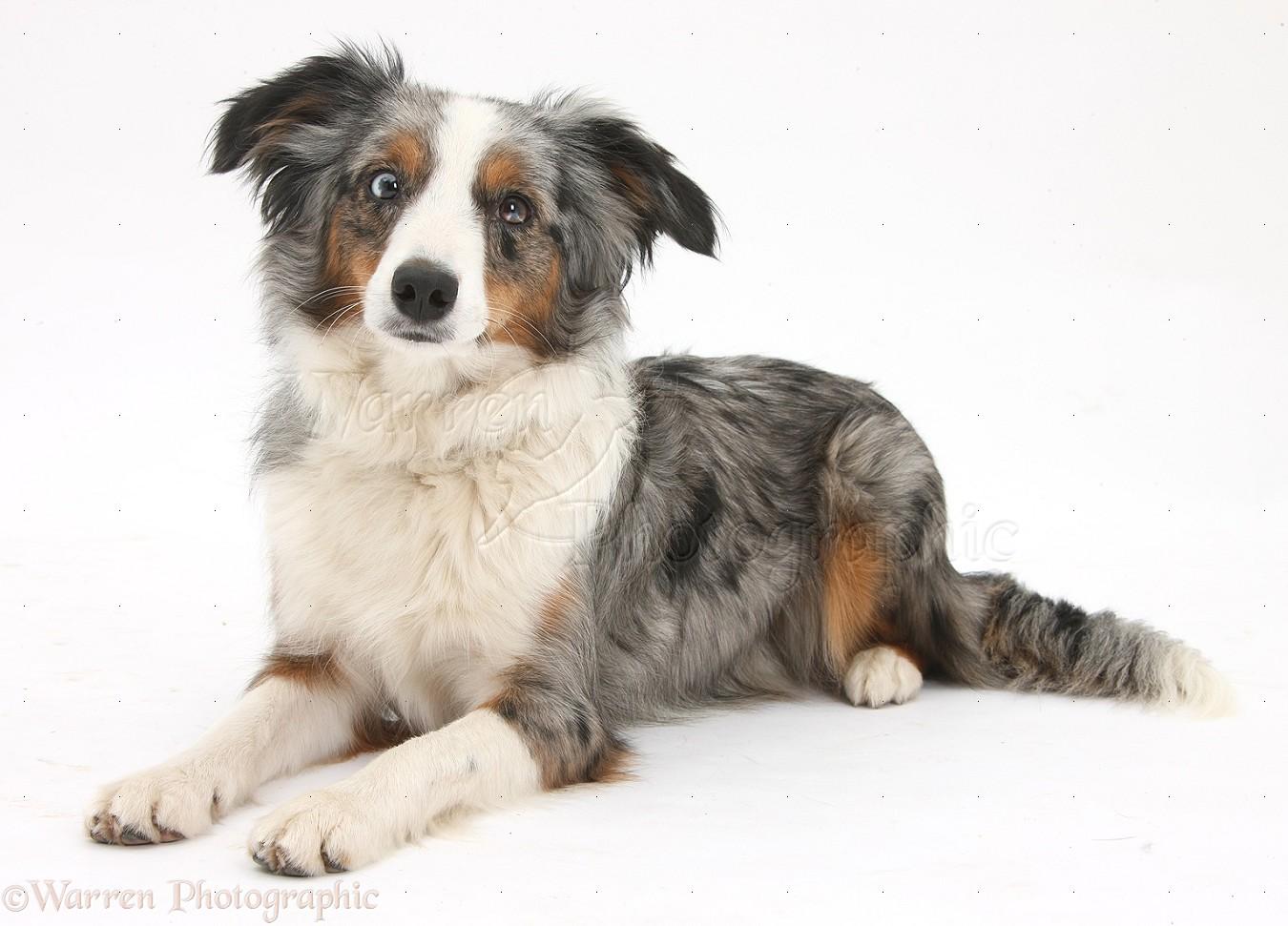 Best Miniature Dogs Uk