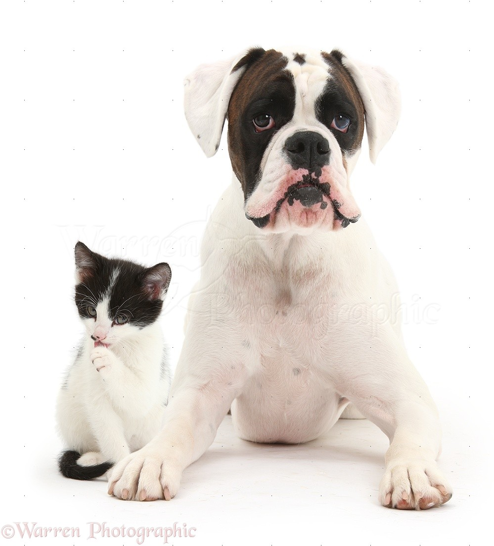 Pics Of Cats And Dogs Together
