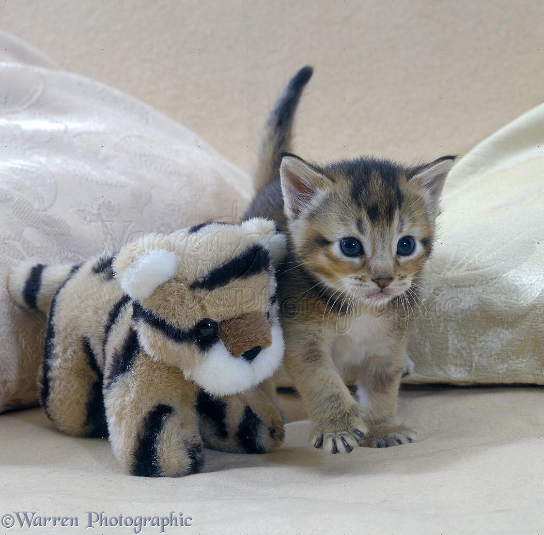 orphan kitten care
