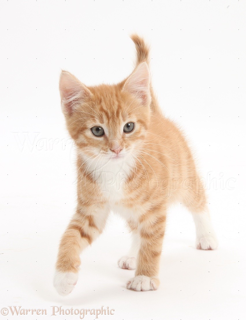 Pictures Of Cats Walking