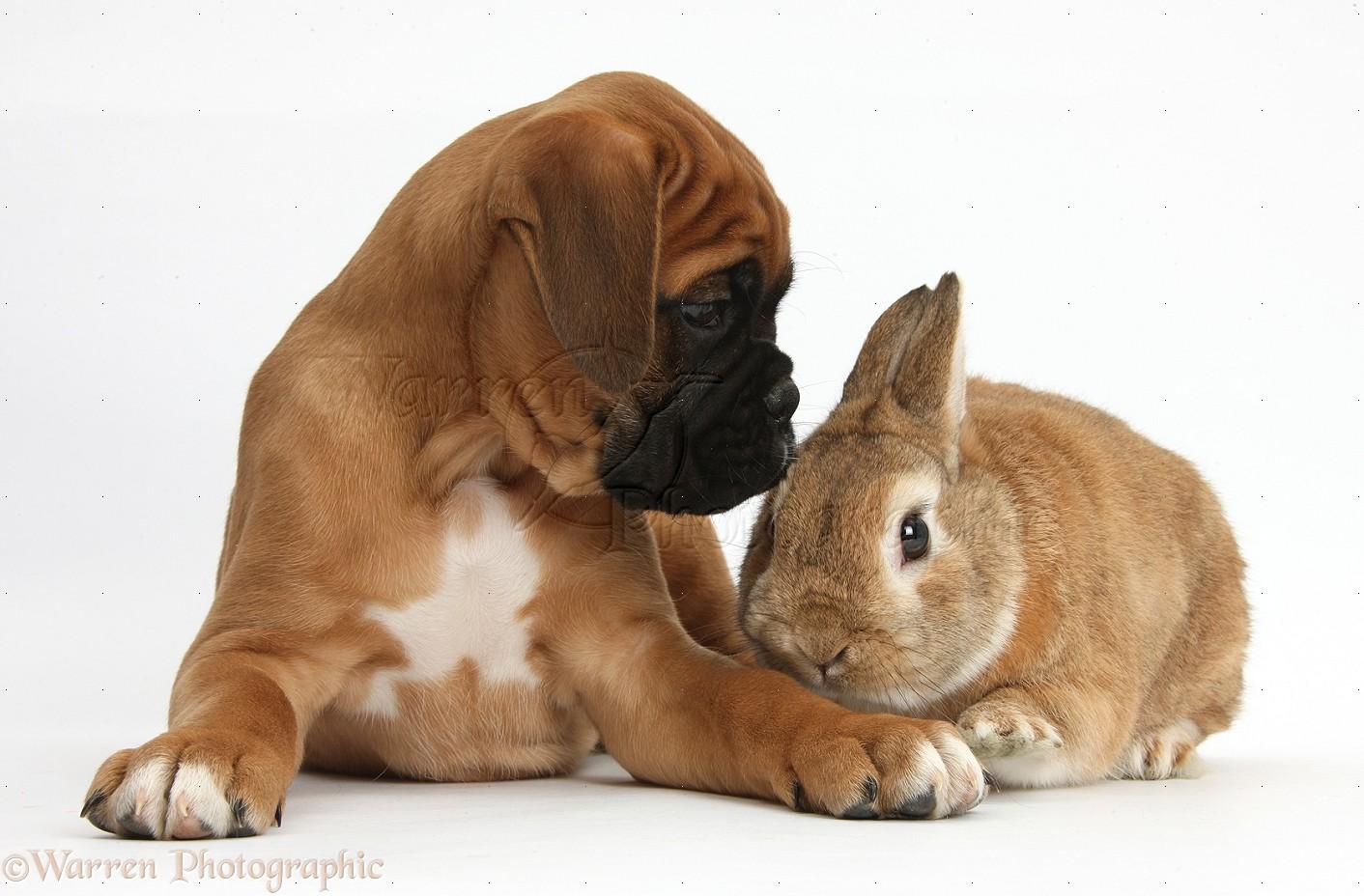 Cute Big Dog Puppies