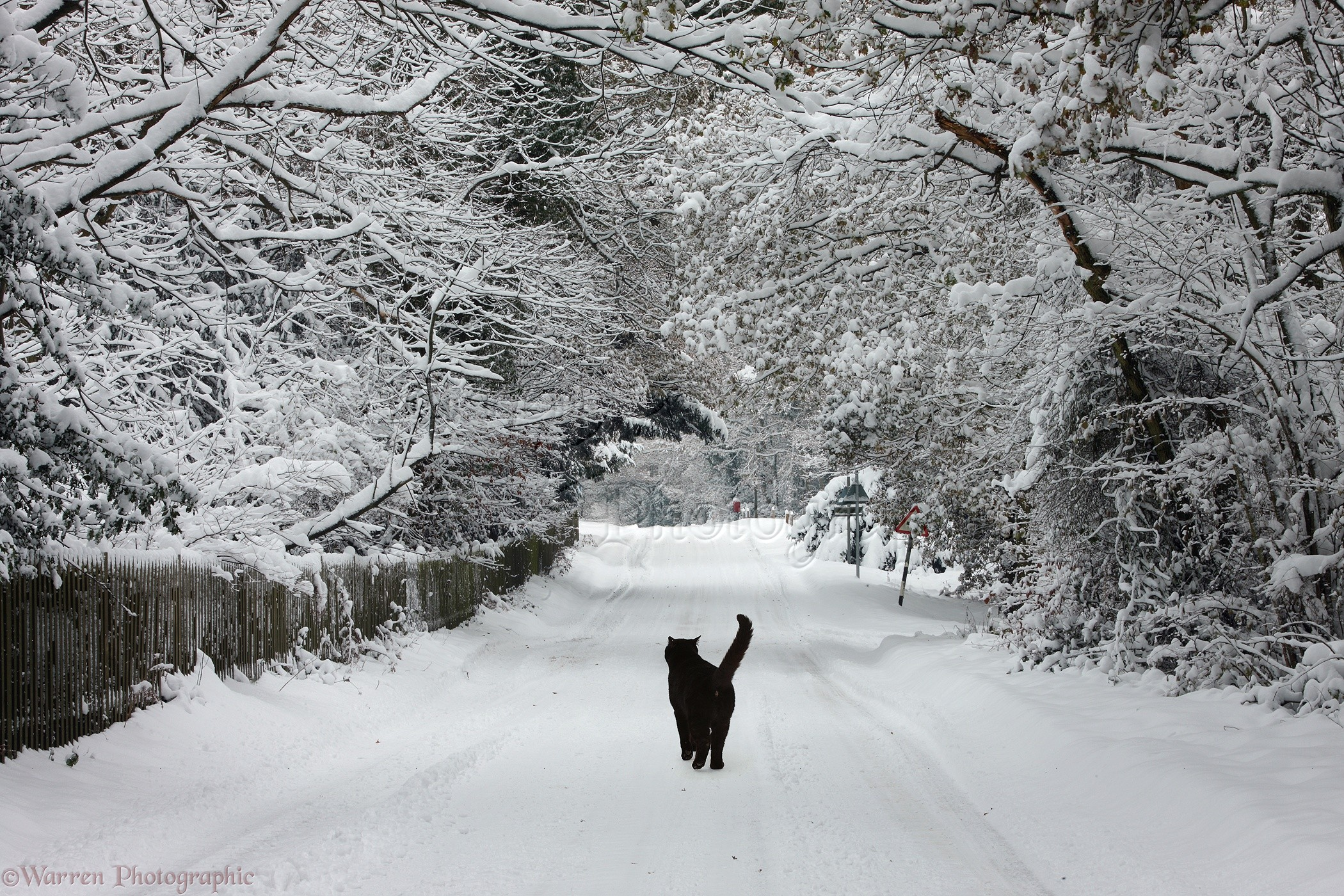 Black Cat In Snow Print