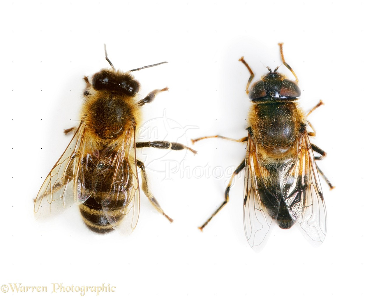 drone new with 38654 Honey Bee And Hover Fly Side By Side on 7358329920 together with 7014613909 also Croatian Stereographic Projections additionally Cinefly drone uav aerial geelong waterfront likewise Drones Multirotors c 116.
