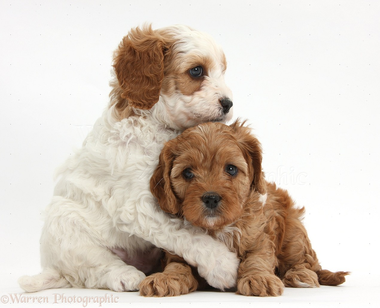 Dog Hugging Puppy