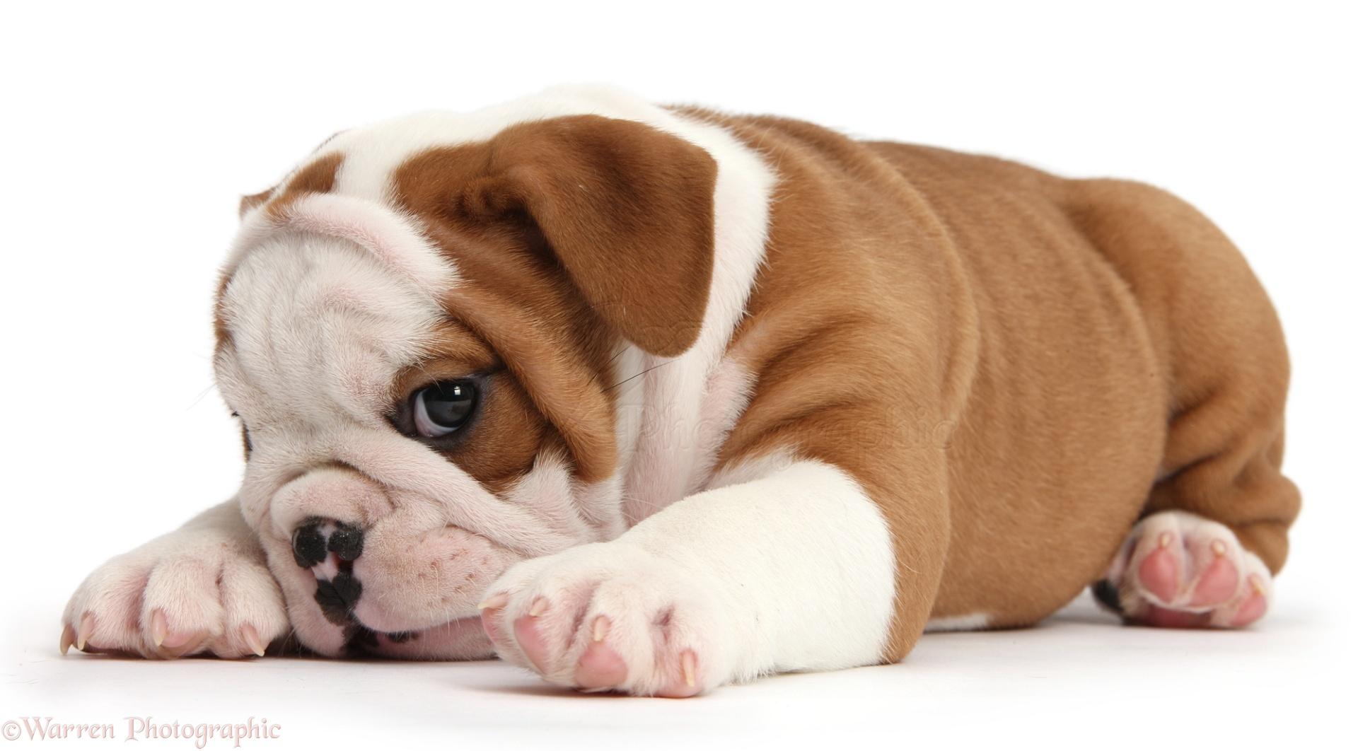New Puppy Dog Depressed