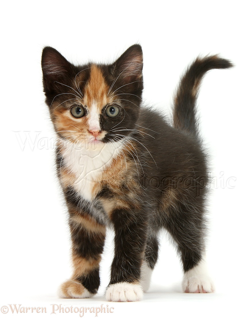 best flea remedy for cats
