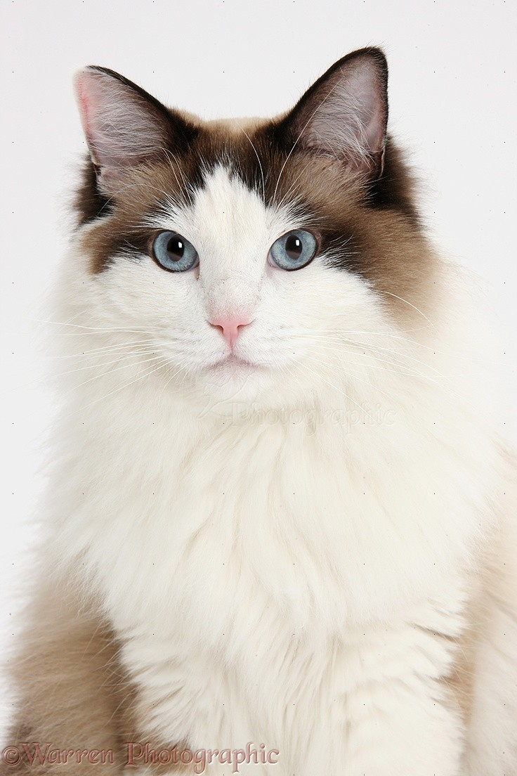 Cat Pictures On White Background