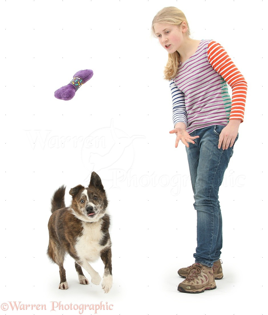 girl playing fetch with dog photo   wp39870
