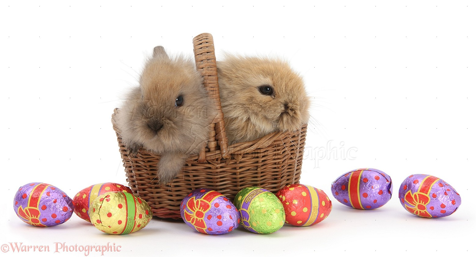 baby rabbits in a basket with easter eggs photo wp39920