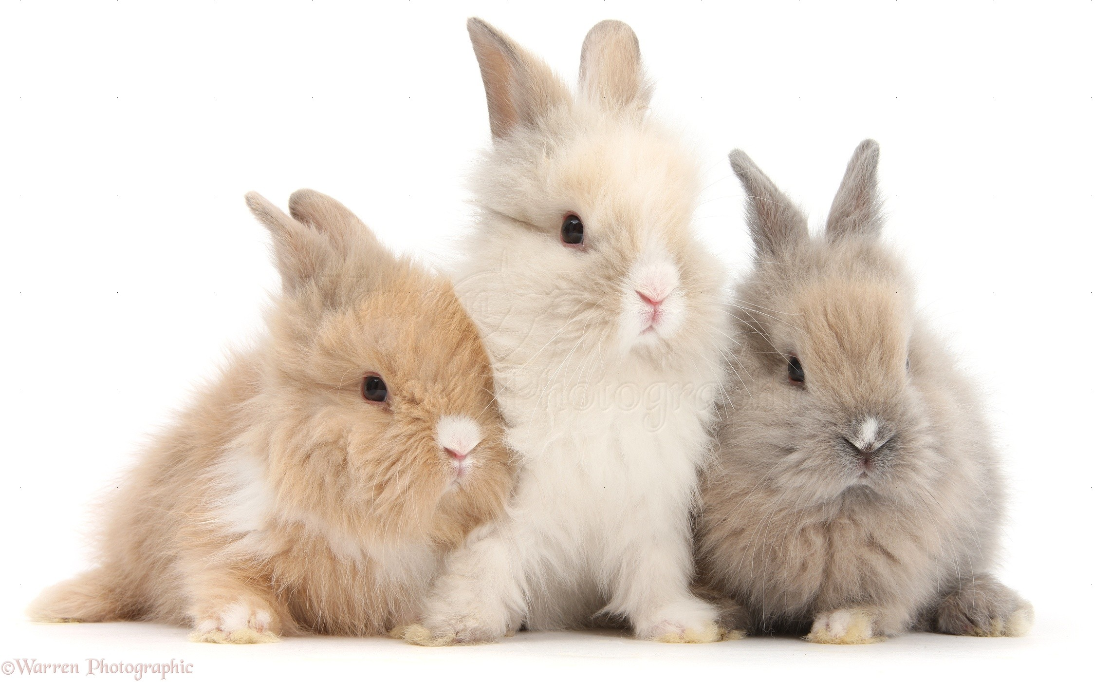 These horrible stories of rabbit abuse in Singapore will ...