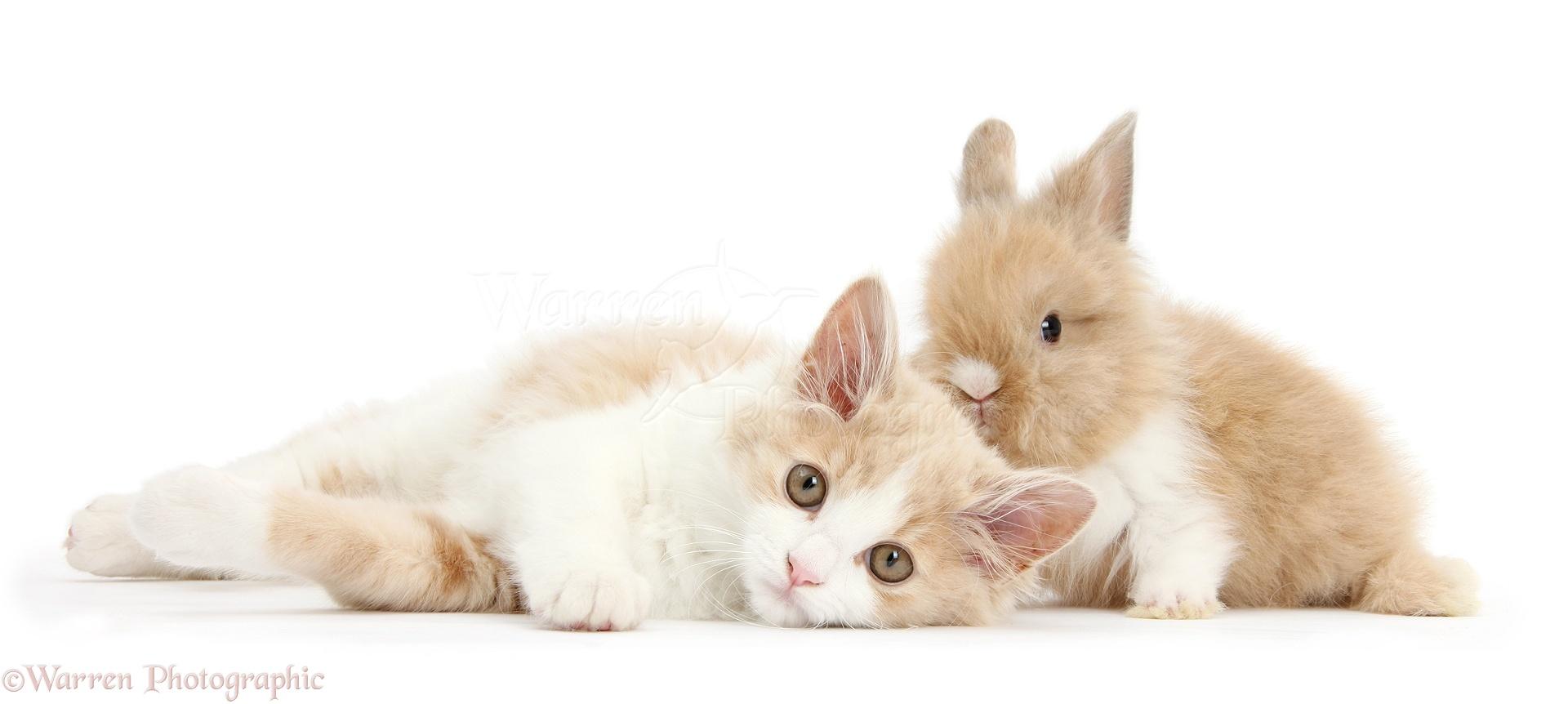 Открытки с кроликом и котом