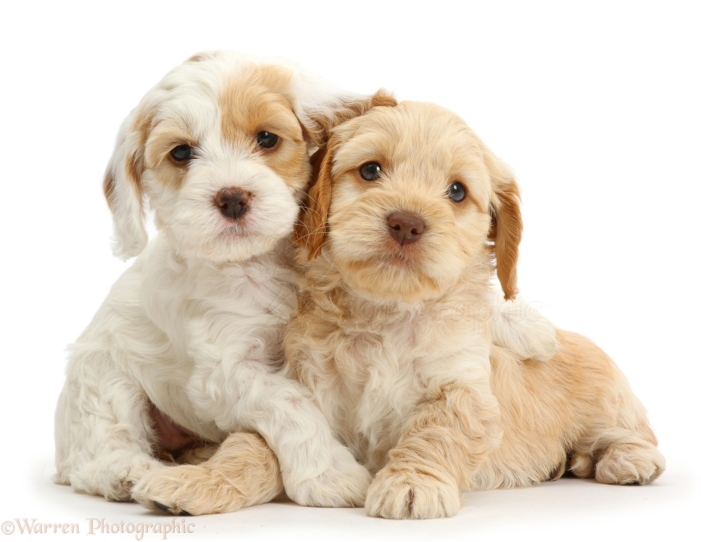 Dogs & Puppies photo selection by Warren Photographic, p1