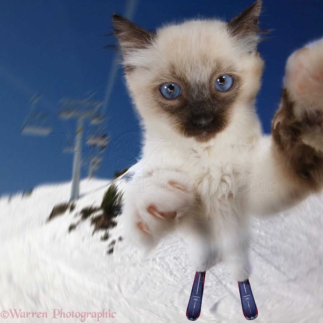 Jpg Funny Cat