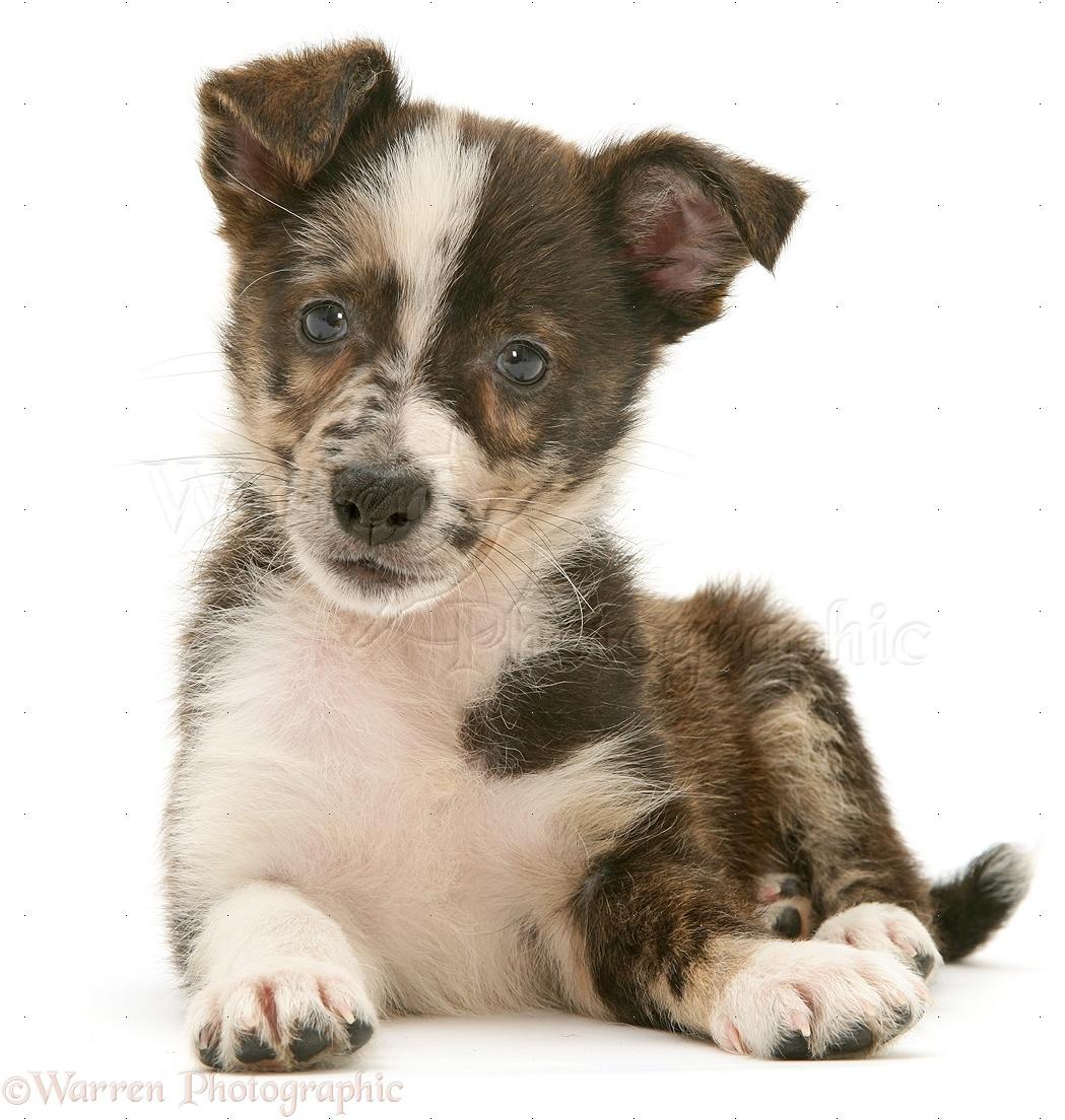 Dog: Mongrel puppy photo WP41783 Дворняжка Щенок
